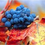 Innovación y dinámicas de aprendizaje en las industrias vitivinícolas argentina y chilena