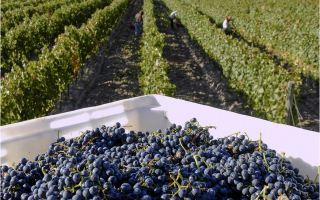 Mercado de uvas