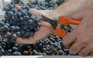 precios-de-uvas-y-vinos-de-traslado